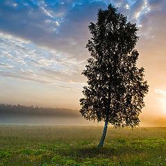 """фото """"Утро в Клинской волости"""""""