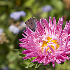 """photo """"butterfly on a flower"""""""