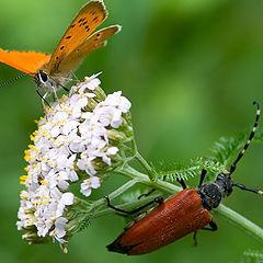 """фото """"А жуки рогатые, Мужики богатые, Шапочками машут, С бабочками пляшут."""""""