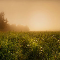 "photo ""Misty morning"""