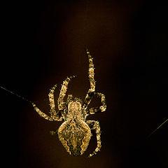 "фото ""spider"""