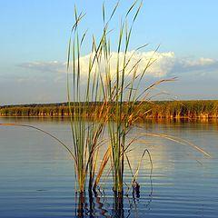 """фото """"Вечер на озере"""""""