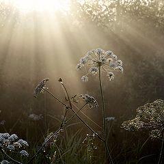 """photo """"Sun rain"""""""
