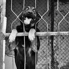 """фото """"I want FREEDOM"""""""