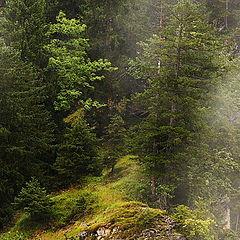 """фото """"Wood on Rocks"""""""