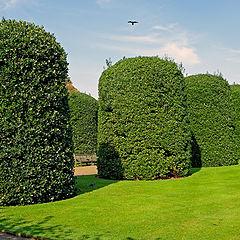 """фото """"Round Trees"""""""