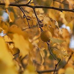 """фото """"Осеннее золото"""""""