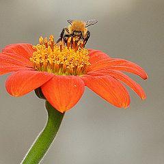 "photo ""Bee"""