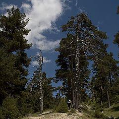 """фотоальбом """"Camino de Santiago de Compostella by lasemn"""""""