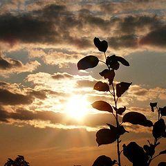 """фото """"Осеннее солнышко"""""""
