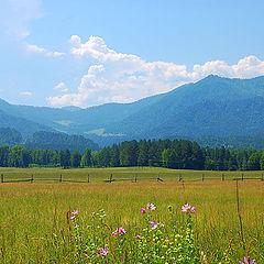 """photo """"Sunny field"""""""