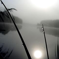 """фото """"Прекрасное утро"""""""