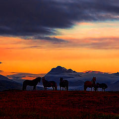"фото ""Horses in sunset"""