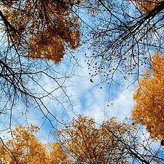 """фото """"Осень закружила..."""""""