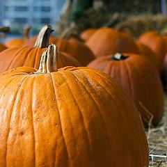 "фото ""pumpkin"""
