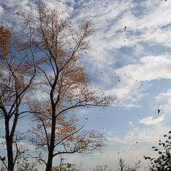 "фото ""Осень. Листопад"""
