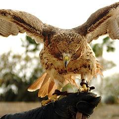 """фото """"Свободная птица"""""""