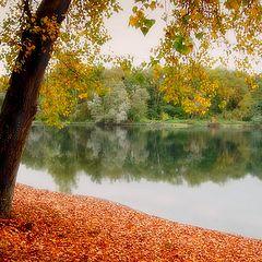 """photo """"Light autumn"""""""