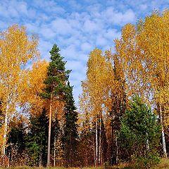 """фото """"Осень в родниковом крае"""""""