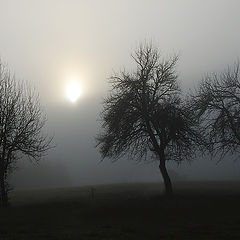 """photo """"In the mists"""""""