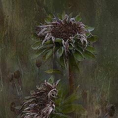 """фотоальбом """"Цветы, природа"""""""