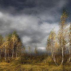 """фото """"Порыв ветра"""""""