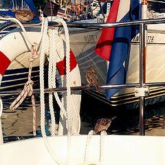 """photo """"harbourage"""""""