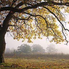 "фото ""Прогулка в осень."""
