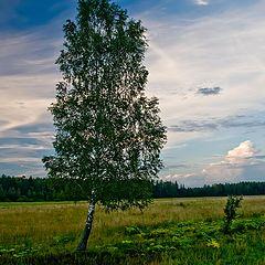 """фото """"Во-поле березка стояла-2"""""""
