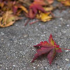 """фото """"Осень. В тысячный раз"""""""