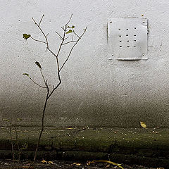 "фото ""Осенний минимализм 2"""