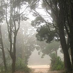 """фотоальбом """"Hazy woods"""""""