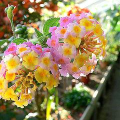 """фото """"The Gardener"""""""