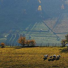 "photo ""Morning on the mountain"""
