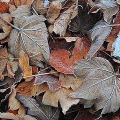 "photo ""Fallen foliage"""
