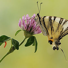 "фотоальбом ""Butterflies"""
