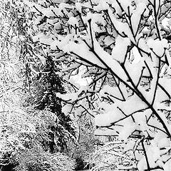 """фото """"28 ноября. Зима"""""""