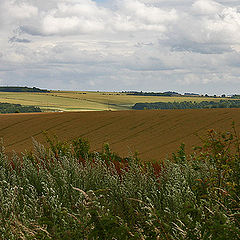 """photo """"Multi-coloured a field"""""""
