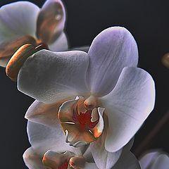 "фото "".....Flower 2..."""