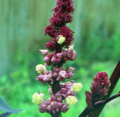 """photo """"Kletshevina flower"""""""