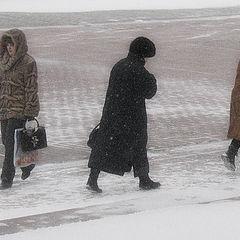 "photo ""blizzard"""