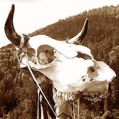 """фото """"год желтого быка"""""""
