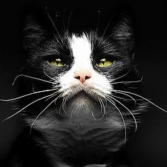"""photo """"Black CAT ..."""""""