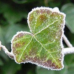 """фото """"Frozen heart"""""""