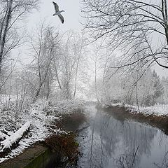 "фото ""Winter white"""