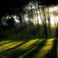 "фото ""Dreamy Light"""