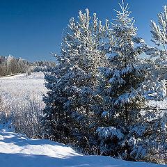 """фото """"Зимний лес."""""""