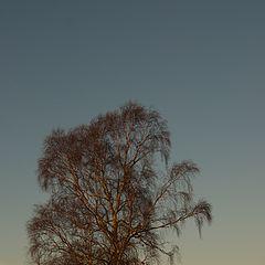 """фото """"tree#3"""""""