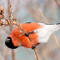 """фото """"Эй, птичка, летим со мной, там много вкусного!"""""""