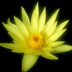 "фото ""Yellow"""